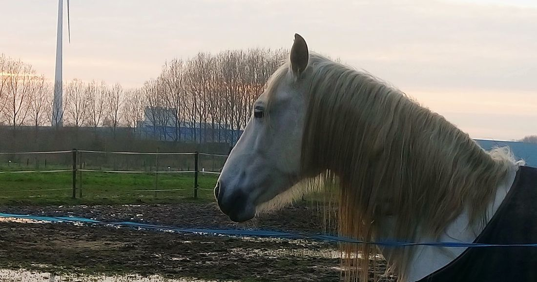 Horse Animal Themes One Animal Nature Beauty Taking Photos Photo♡ Sony Xperia M5 Agriculture Walking Around Evening Sky