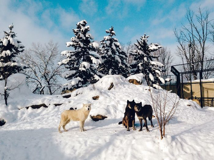 Dogs on snow covered field