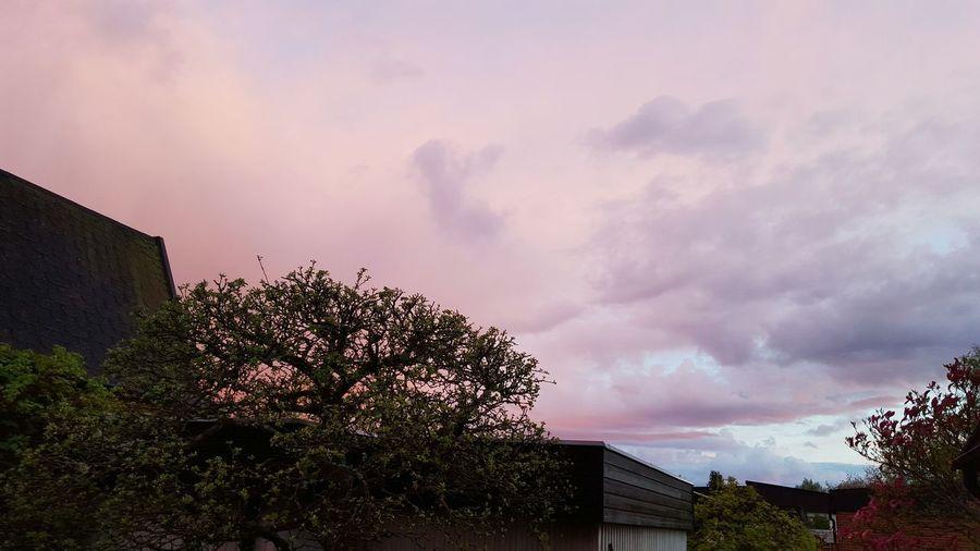 Sunset Fresh Air Garden Apple Tree Colorfulsky Colourful Sky