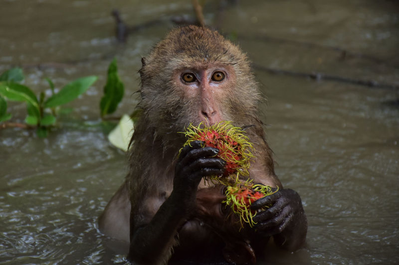 Animal Themes Animal Wildlife Animals In The Wild Day Eating Food Mammal Monkey Nature One Animal Outdoors Water