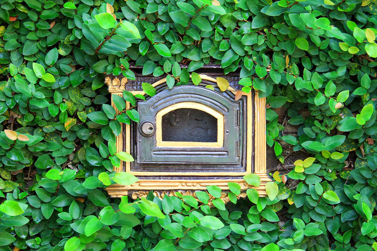 Architecture Beauty In Nature Building Building Exterior Built Structure Closed Creeper Plant Day Full Frame Green Color Growth Ivy Leaf Nature No People Outdoors Plant Plant Part Wall - Building Feature Window