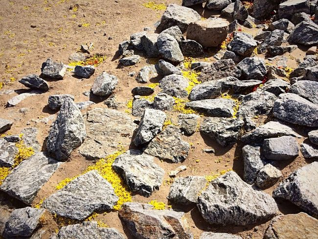 Beauty in nature, rocks cover with small yellow flowers that are falling near by trees.✨ West Wetlands, Yuma, AZ Me Myself And I Beauty In Ordinary Things IPhone Photography Flowers, Nature And Beauty No People Land Sunlight Nature Sand Outdoors Close-up Beauty In Nature Rock Tranquility Abundance