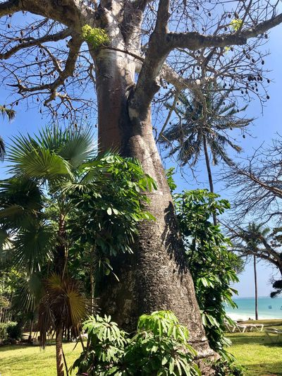 Tree Growth Tree Trunk Nature Palm Tree Branch Outdoors