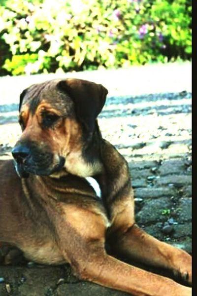 Doggy DogLove Dogfriend
