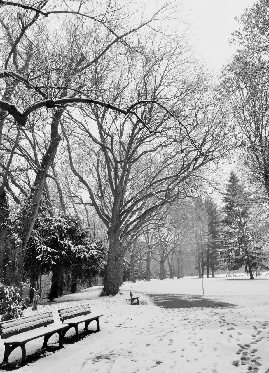 tree, winter, snow, cold temperature, weather, nature, branch, bare tree, beauty in nature, no people, outdoors, snowing, scenics, day, sky