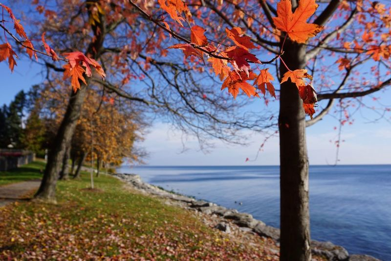 Tree Change Nature Autumn Tranquility Outdoors Sea Branch Focus On Foreground Leaf Beauty In Nature No People Sky Growth Water Day Close-up Bare Tree Scenics Foreground