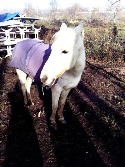 White horse :)