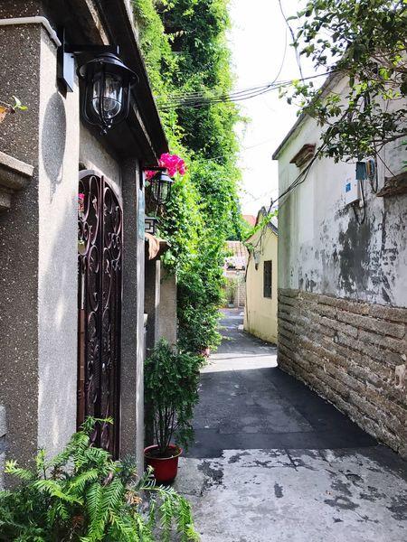 alleyway Flowers,Plants & Garden Wallflower