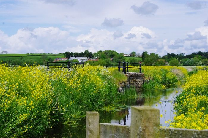 Nature On Your Doorstep Nature Somerset Levels Uk In All Its Glory Relaxing Taking Photos Landscape Nature Photography [ Natures Diversities Yeah Springtime!