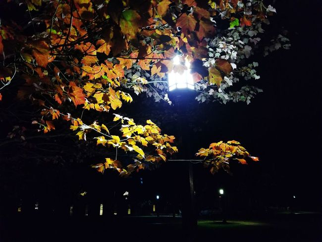Tree Illuminated Outdoors Night No People Beauty In Nature Nature Sky EyeEmNewHere