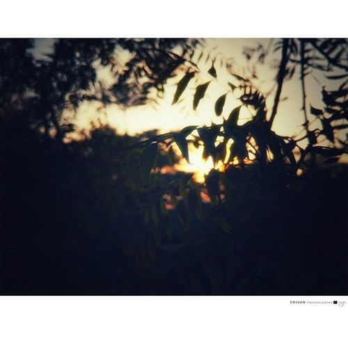 【 冬梢夕 】 LGG4 手機攝影 365Snap Sunset