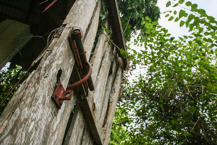 Branch Close-up Day Door Flying Green Green Color Growth Low Angle View Nature No People Old Old-fashioned Philippines Red Rusty Tranquility Tree Tree Trunk Wood - Material