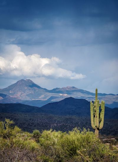 Scenic view of saguaro in field against sky