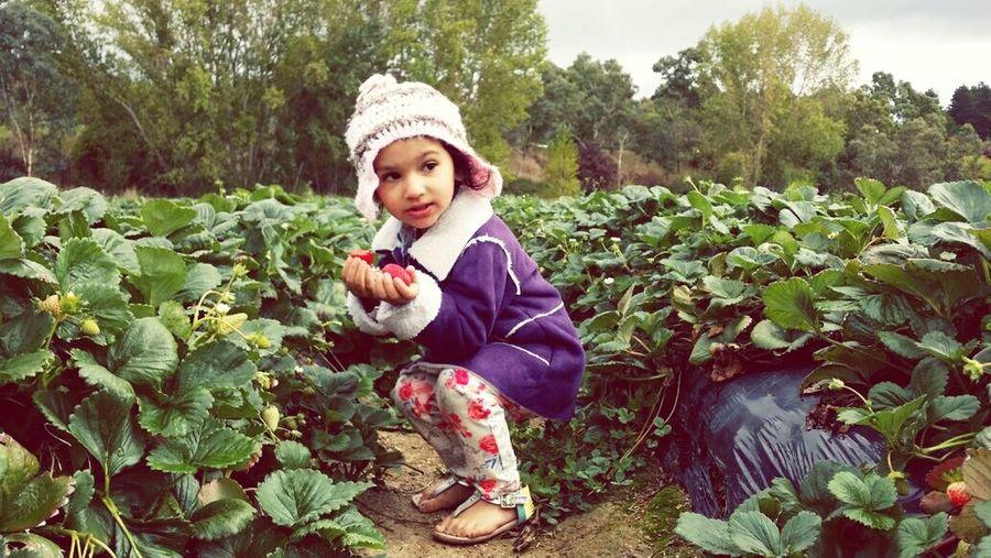 Strawberry picking! Beautifulniece