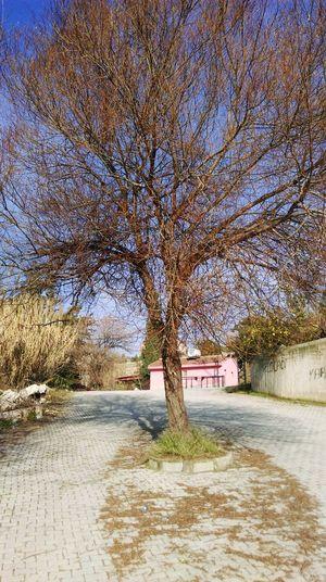 Negative Space Walking Around Hugging A Tree Jogging Escaping Town Kubratemli