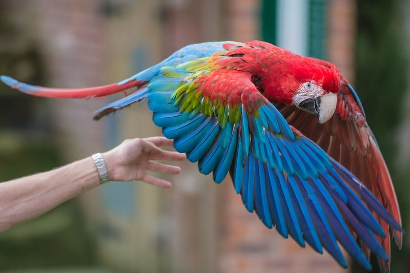Macaw at