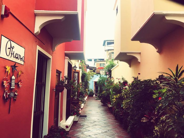 Building Exterior Architecture Built Structure Building City Residential District Plant Street Wall Wall - Building Feature Text House Nature The Way Forward Communication No People Sunlight Day Direction Outdoors
