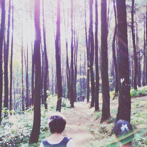 forest daze? Camping Forest Sun Light