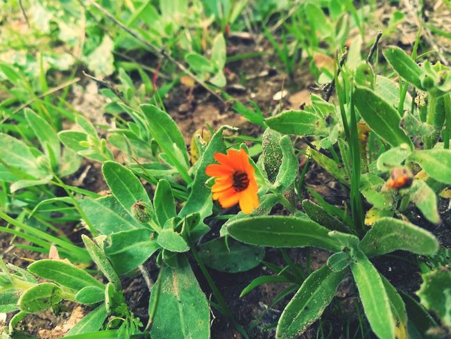 flower Leaf Growth Green Color Plant Nature Day Flower EyeEmNewHere