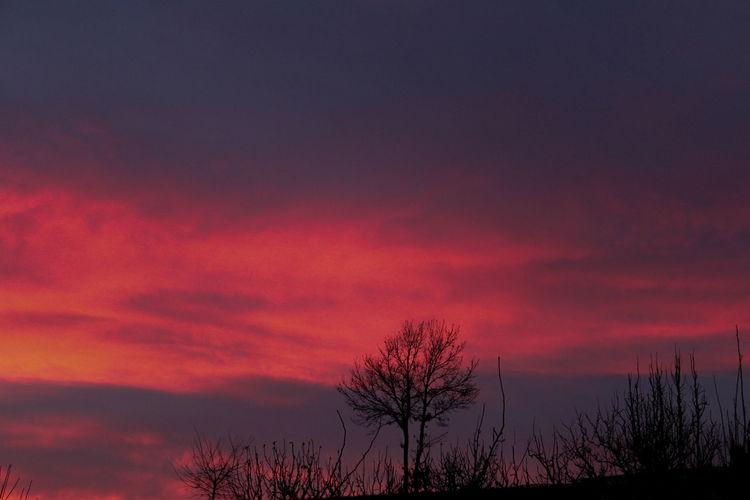 Tree Astronomy Sunset Red Silhouette Sky Landscape Cloud - Sky Single Tree Bare Tree