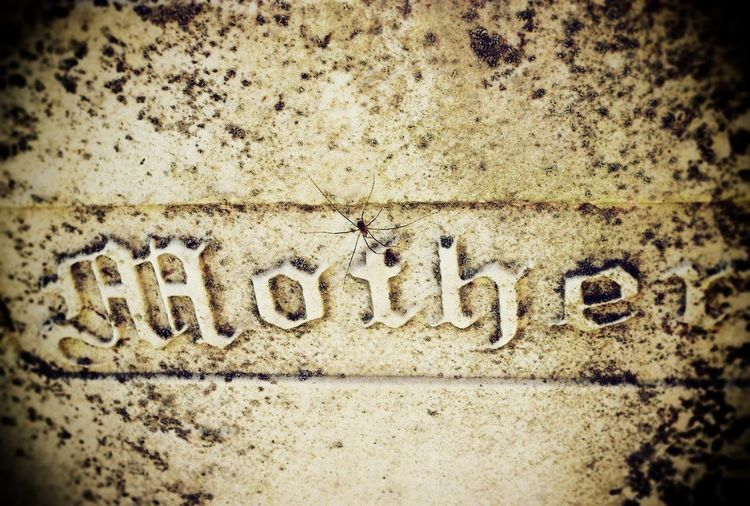 """""""Mother"""" 35mm film Greenlawn Cemetery Salem 2003 Text Single Word Vignette Emotion Death Mother Mommy Spider Spiders Arachnid Moss Mossy Weathered Grave Gravestone 35mm Film Film Photography 2003 Salem Salem, Ma. Cemetery Cemetery Photography Morbidity Macabre Gothic"""
