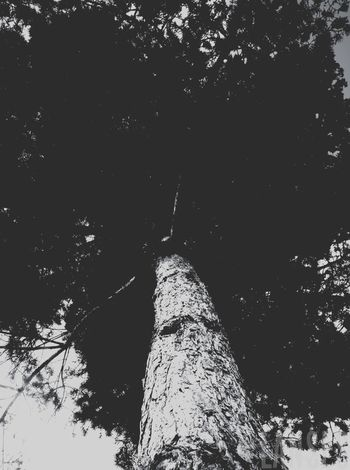 Bad Quality Bark Beauty In Nature Black And White Branch Calm Cortex Dark Darkness Day Growth Low Angle View Nature No Color No People Outdoors Scenics Sky Tranquil Scene Tranquility Tree Tree Trunk