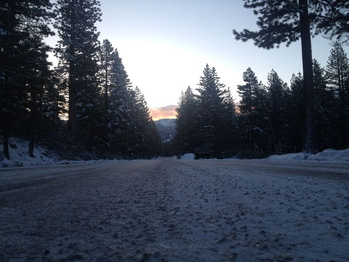 Incline Village Pine Road Snowy Road Winter Road Cold Temperature Mountain Life Nevada Pine Tree Sierra Nevada Sierra Nevada Mountains Snow Snow Bank Winter