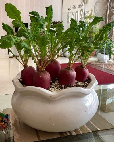 Home Decor Turnip Potted Plant Potted Plants On Tables Home Decor Plant Potted Plant Food No People Nature Fruit Indoors  Growth Freshness Healthy Eating Decoration Flower Pot Bowl