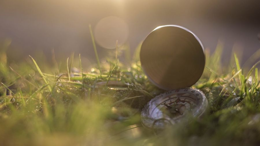 Close-up of pocket watch on grass