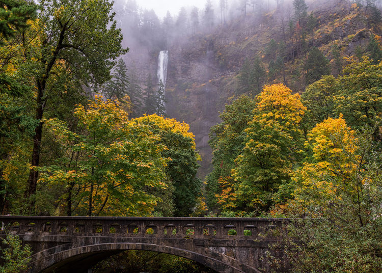 Arch bridge amidst trees in forest during autumn