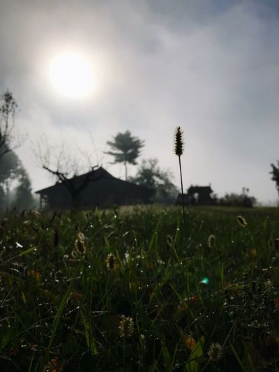 Field Grass No People Growth Focus On Foreground Landscape Sky Outdoors Nature Tree Tranquility Day Beauty In Nature Scenics Close-up Mist Fag Morning Morning Light Fall Fall Beauty Fall Morning White Romantic Sky