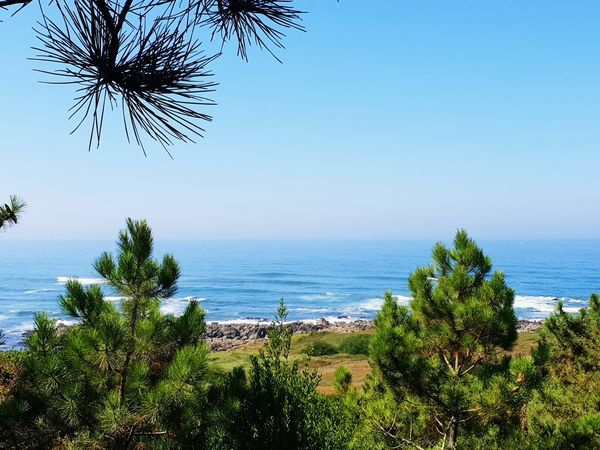 Atlantic Ocean Portugal Tree Water Flower Sea Palm Tree Beach Blue Clear Sky Sky Horizon Over Water Seascape Calm Pine Tree