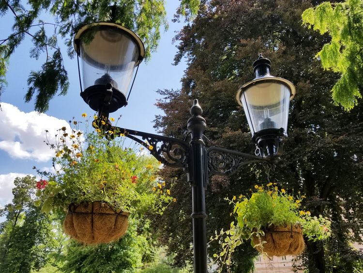 Lamp post with hanging baskets of flowers at a Botanical Garden. Nature Clouds Summer Plants Plant Life Light Bulb Blue Sky Leaves Botanical Garden Garden Garden Photography Lamp Lamp Post Lights Baskets Hanging Flowers Trees Tree Close-up Plant Glass Street Lamp Botanical