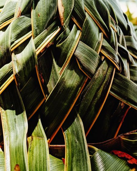Woven No People Green Color Close-up Day Plant Nature Leaf Full Frame Growth Plant Part Focus On Foreground Beauty In Nature Pattern Natural Pattern Outdoors