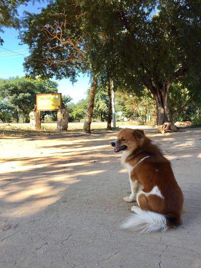 One Animal Tree Animal Themes Pets Mammal Domestic Animals Shadow Sitting No People Outdoors Day Dog Feline Nature
