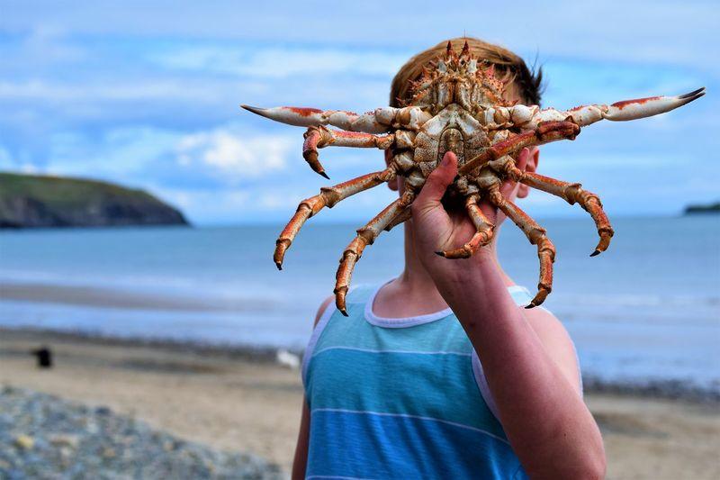 predator Beach Crab On The Beach Face Hidden Faces Mix Yourself A Good Time Pose Predator Sea The Week On EyeEm Spider Crab Fun Pictures  Nefyn Gwynedd