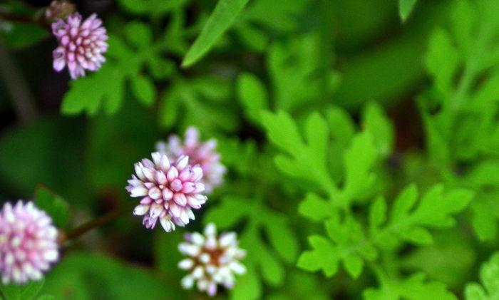 Garden Photography Pink And Green Macro Photography Beautiful Nature