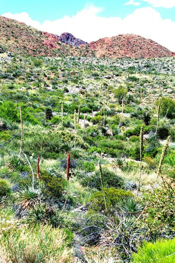 Exploring Nature Mountains Mountain_collection Explore Your City Hiking Trail Desert Beauty Elpaso In The Desert Yucca Franklin Mountains Deserts Around The World