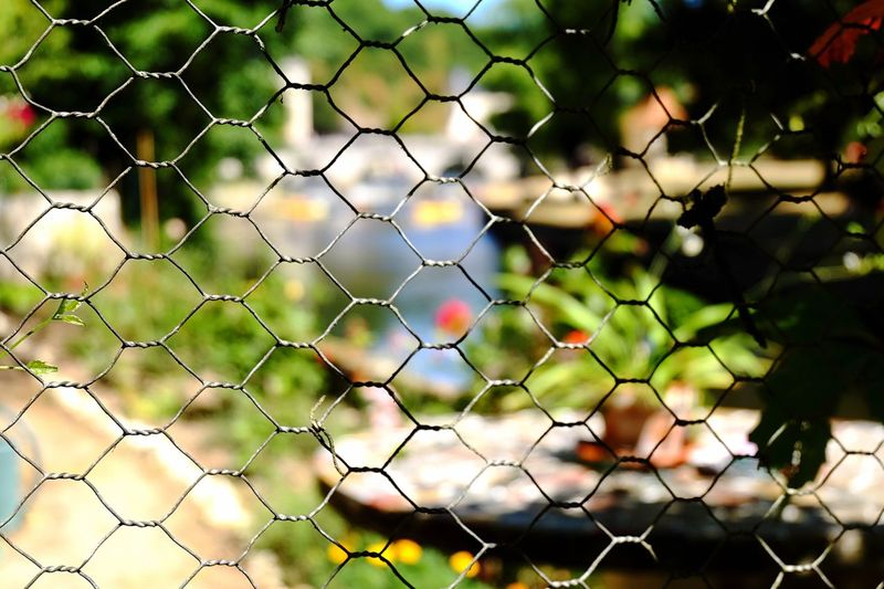Fency colors Fence Fences Check This Out Fency Fancy Colorful Colorful Life Colorful Nature Fresh On Eyeem  Stunning Eyeemphotography Getty Images Photooftheday Eye4photography  Balcony View Beautiful EyeEmbestshots See What I See Beauty In Nature Colors Of Nature