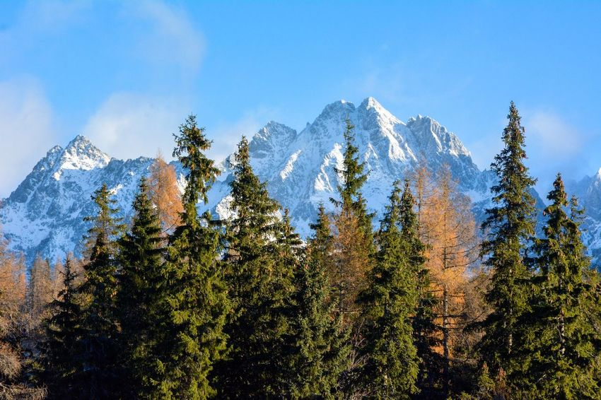 Hiding behind the forest Slovakia High Tatras Tatra Mountains Gerlachovský štít Strbske Pleso Mountain Tree Nature Day Sky No People Mountain Range Blue Forest Snow Outdoors Landscape Cold Temperature Sunny Winter Blue Sky Beauty In Nature Beauty Of Slovakia Beautiful Nature Adventure Perspectives On Nature