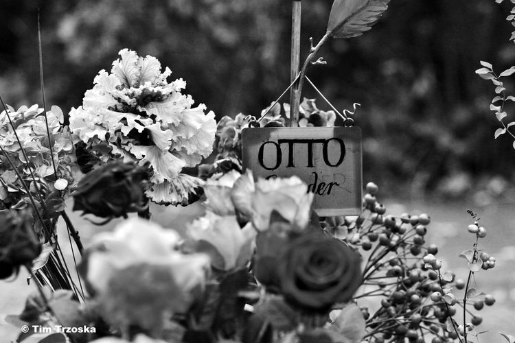 Day Flower Friedhof No People Otto Sander Outdoors