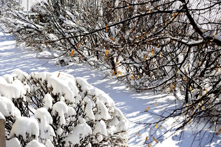 Relaxing Taking Photos Enjoying Life Snow Landscape From My Point Of View Winter Snowpocalypse2015