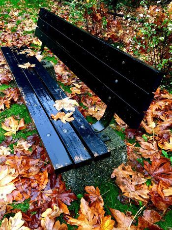 Park bench surrounded by wet leaves Autumn Autumn🍁🍁🍁 Autumn Collection Autumn Leaves Autumn Colours Autumn Is Here...Fall Mood! IPhoneography Outdoors❤ EyeEm Nature Lover Life As I Know It Tranquil Scene Non-urban Scene From Where I Stand