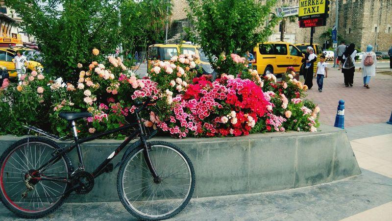 Bicycle Flowers Pink Colorful Day Wonderfultime Wonder Plant City Outdoors Freshness Nature Purple EeYem Best Shots Eeyem Photography