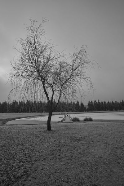 Austria Bare Tree Beautiful Landscape Black & White Day Diffuse Diffused Light February 2017 Foggy Landscape Foggy Morning Foggy Weather Growth Monocrome Photography Monotone Pond Nature No People Outdoors Pond Pond Landscape Sky Styria Tranquility Tree Valentine's Day  Water