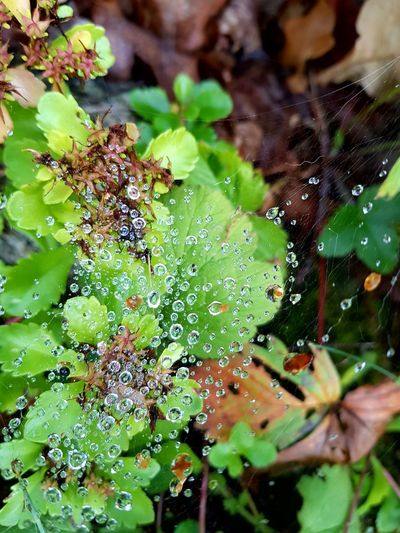 Spider Web Green Color Nature Day Water Beauty In Nature Outdoors Freshness Close-up