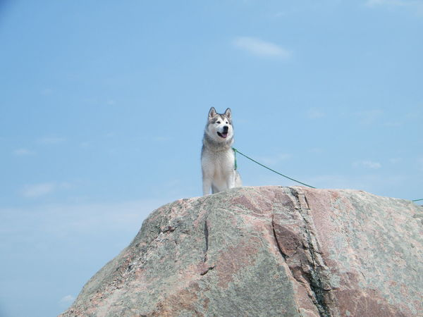 Lookout point Observation Point Animal Themes Boulder Domestic Animals Low Angle View No People One Animal Sky