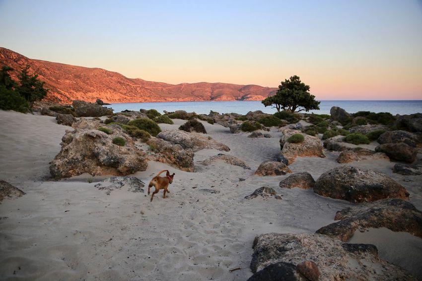 Kedrodasos beach Beach Creativity Dog Dog Running Domestic Animals Nature Rock Sunny Tree Zen