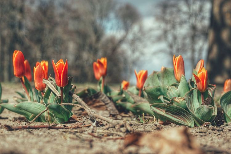 2019 Niklas Storm April Flower Springtime Flower Head Beauty Front Or Back Yard Uncultivated Close-up Flowering Plant Blossom In Bloom Blooming Petal My Best Photo