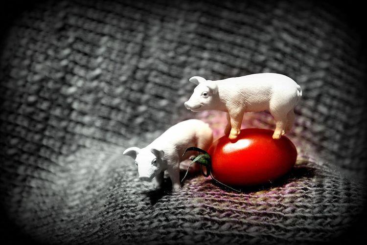 トマトはトマト Vegetable Japan Photography EyeEmNewHere Photographer Petit Tomatoes Tomato Piggy Pigs Pig Indoors  Toy Animal No People Close-up Still Life Representation Art And Craft Animal Representation Selective Focus EyeEmNewHere